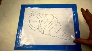 Basic Intarsia Seashell Pt 1of 6 (pattern Prep And Tracing)