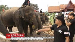 День слонів відзначають у Таїланді