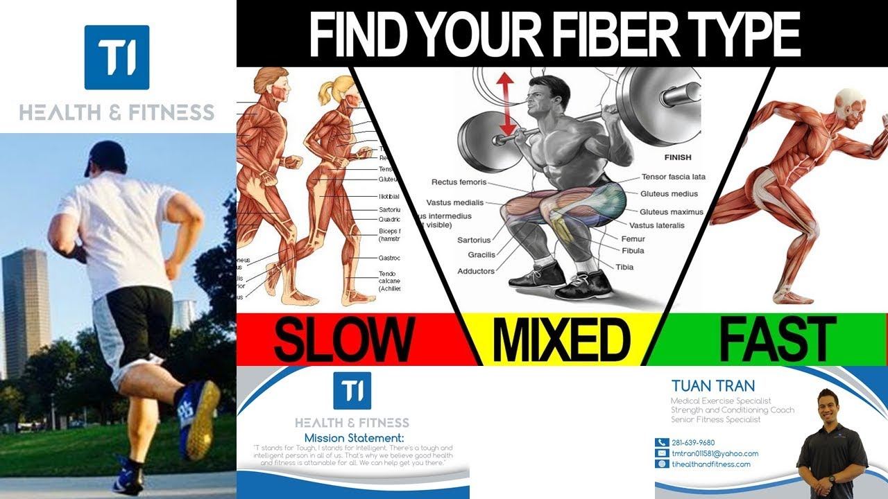 Jogging Vs Sprinting, Slow Twitch vs Fast Twitch Muscle Fibers For A Better  Looking Body