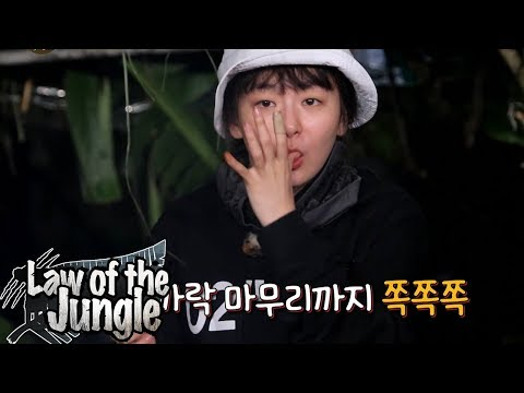 Seul Gi is The Only Peaceful One As Always! Law of the Jungle Ep 322