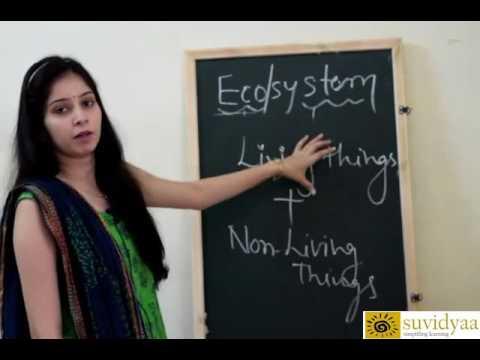 Ecosystem-Components Of Ecosystem