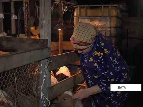 Фермеры Нижневартовского района