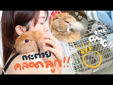Download EP.19 กระต่ายคลอดลูก!! เตรียมตัวยังไงดี? #BunnyTTCoupe | Joyjee Loveberry