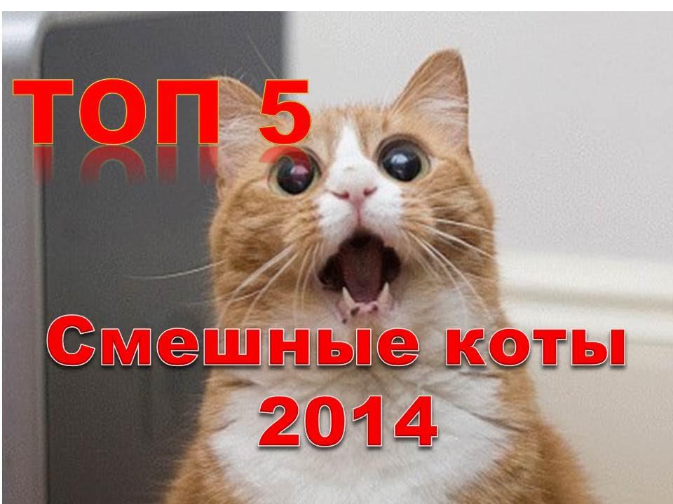 ТОП 5 Смешные коты 2014 Приколы 2014 Лучшая видео