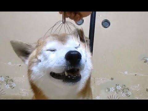 Хаски чешут голову массажером интернет магазин техника для дома тула