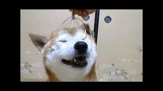 Реакции собак на массажер для головы NEW