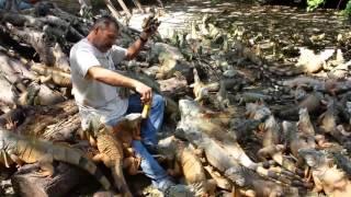 これがイグアナヘブンか!642匹のイグアナが暮らす爬虫類保護施設「イグナリオ・アルチュンディア」(メキシコ)