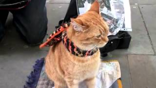 A spasso con Bob, il gatto da strada