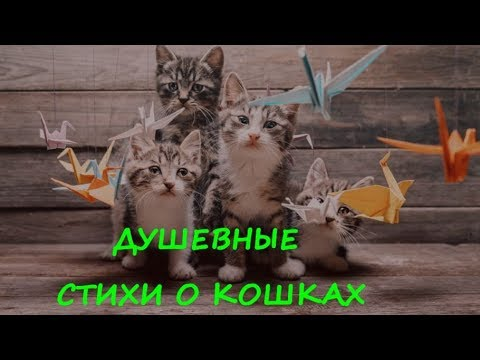 ДУШЕВНЫЕ СТИХИ О КОШКАХ  GOOD POEMS ABOUT CATS