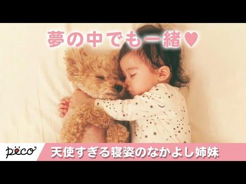 天使すぎる寝姿👼✨ トイプードルと赤ちゃんの仲良し姉妹の日々💕【PECO TV】