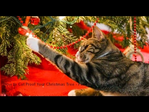 How To Cat Proof Your Christmas Tree.How To Cat Proof Your Christmas Tree Pet Proof Your Christmas Tree