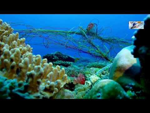 2017 HD Documentary On Coral - AFRICAN WONDERFUL CORAL REEF