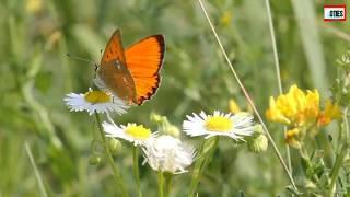 2nd Standard Marathi Poem|| 23. Fulpakhare || इयत्ता २री मराठी कविता|| २३. फुलपाखरे||
