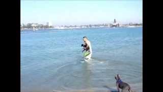 ただいま3ヶ月のアメリカンピットブルのルナは初めてオーシャンビーチ...