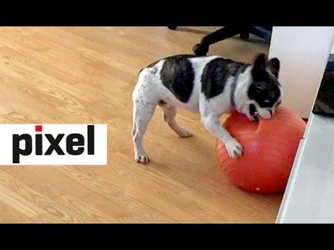 Pixel loves pilates