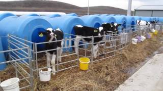 Dairy farming in Russia
