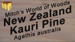 New Zealand Kauri Pine (Agathis australis) - Mitch