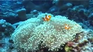 La simbiosi nelle barriere coralline - ReptiliaWEB