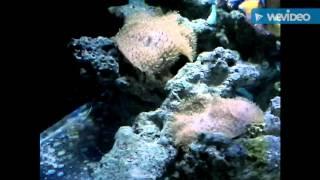 Аквариумные рыбки(Морские рыбы., 2016-03-15T10:46:52.000Z)