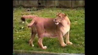 Hayvanlar Alemi Komik Video
