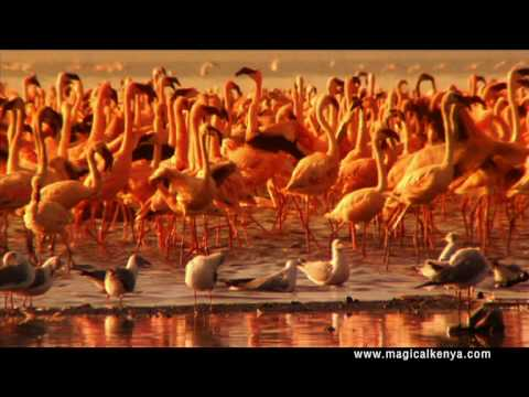 Welcome to Kenya, Discover the Magic of Africa