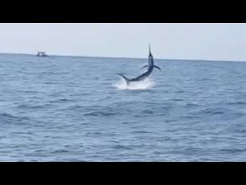 Edencraft 6m Offshore At Bermagui With A Black Marlin