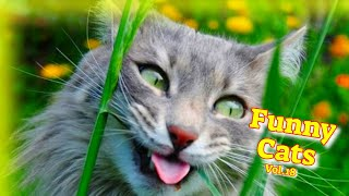 Funny Cats Vol.18 #FunnyCatVideos 2021  #Kitty