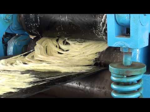 Decorticator (Desfibrador, Defibrator ) V-150 in MOZAMBIQUE 2014-2