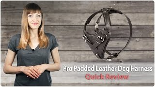 Professional Padded Leather Dog Harness for Walking and Training - Review