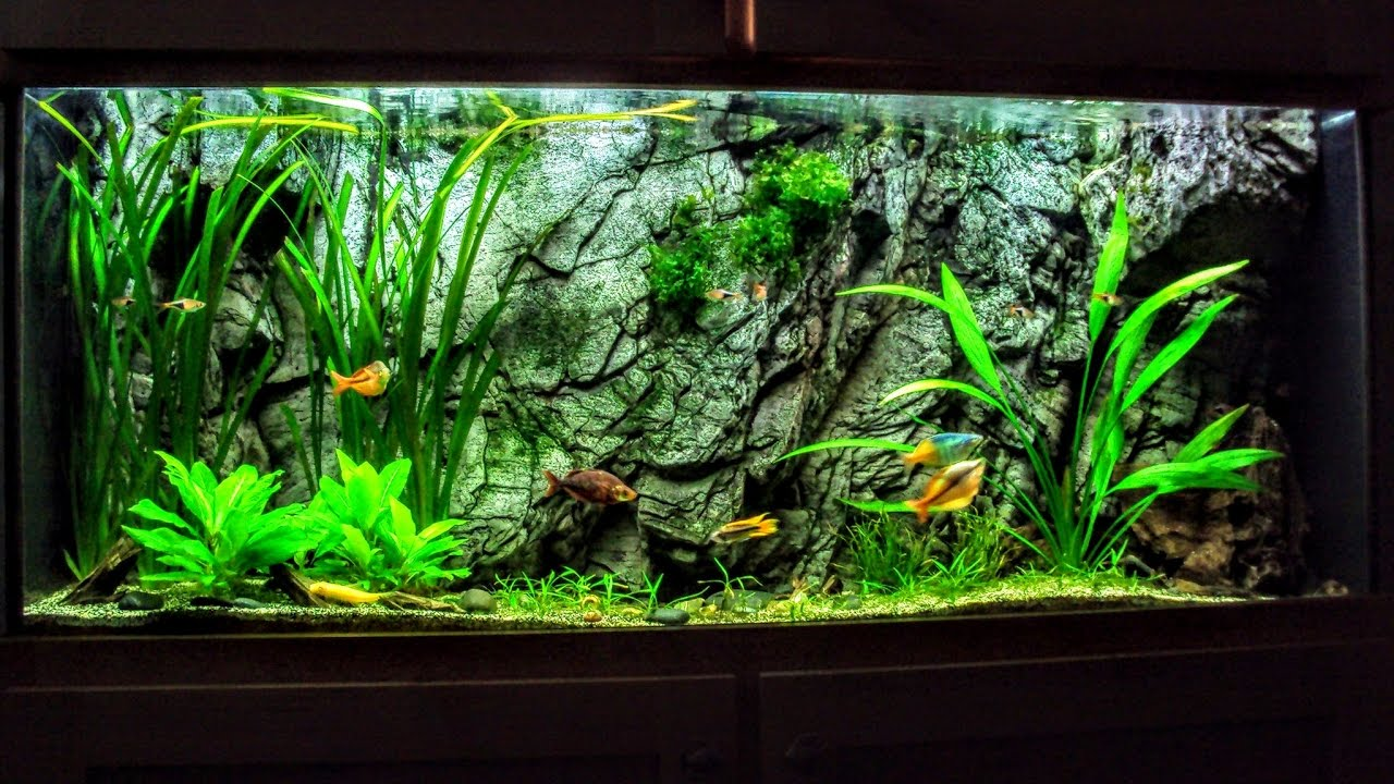 The hard water planted aquarium everything you want to for What do i need for a fish tank