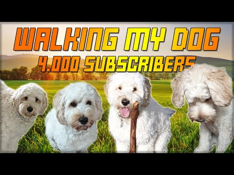 walking my dog  4.000 subscriber special