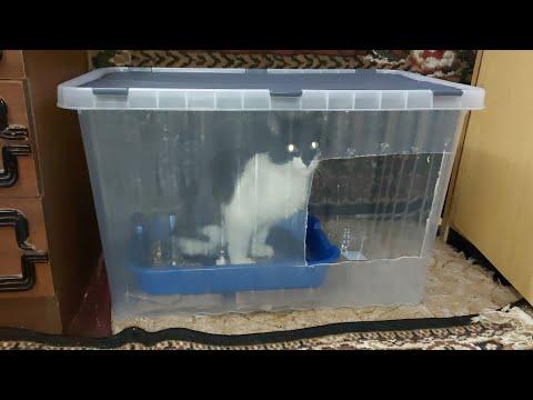 Туалет для кошки своими руками