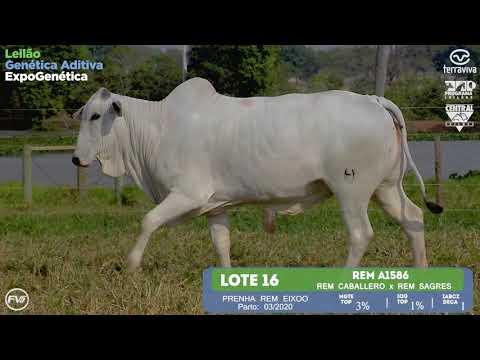 LOTE 16 - Leilão Genética Aditiva ExpoGenética 2019