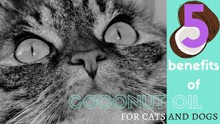 5 BENEFITS OF COCONUT OIL FOR YOUR CAT OR DOG