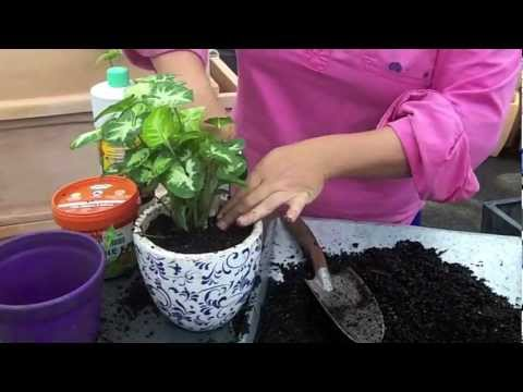 Great indoor plants that are easy - YouTube