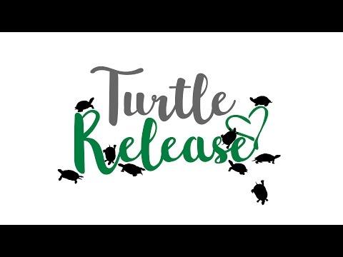 World Wildlife Day 2017: Turtle Release Event