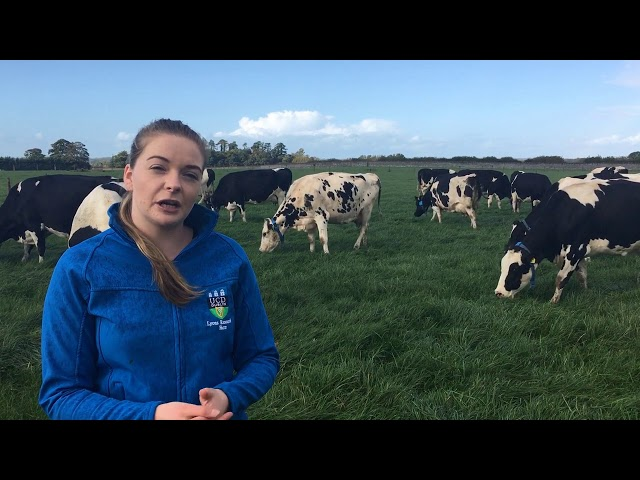 UCD Lyons Estate late lactation dairy research update