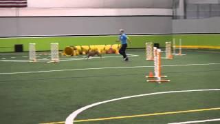 Harper (irish Terrier) 2015 09 12-13  2qq's St.  Charles