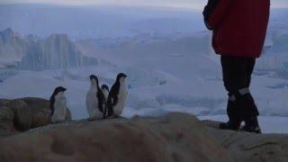 Антарктида. Пингвины - разговор по душам