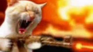 Cat vs. Dramatic Prairie Dog thumbnail