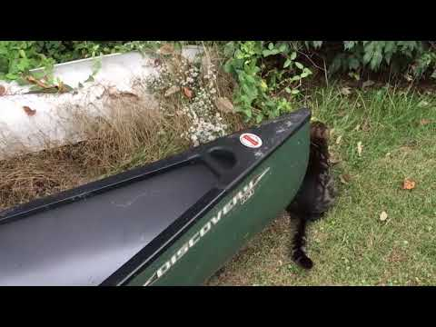 Short Review of Old Town Discovery 119 Canoe (Solo Canoe)