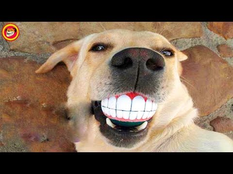 The Dogs Have The Most Beautiful Smile in The World Will Melt in Your Heart with Its Cute Smile!
