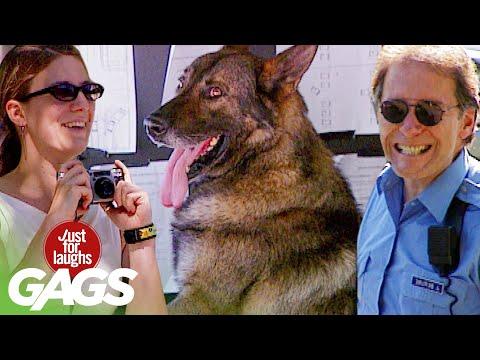 Best of Dog Pranks Vol . 2 | Just For Laughs Compilation
