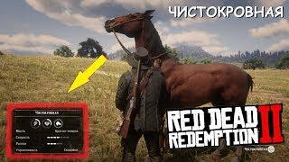 Где НАЙТИ самую РЕДКУЮ ЧИСТОКРОВНУЮ лошадь в Red Dead Redemption 2