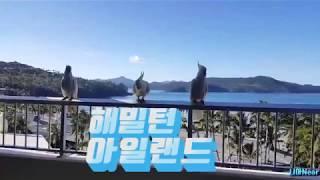 [호주신행] 4월의 해밀턴아일랜드 :  새가많다^^ -…