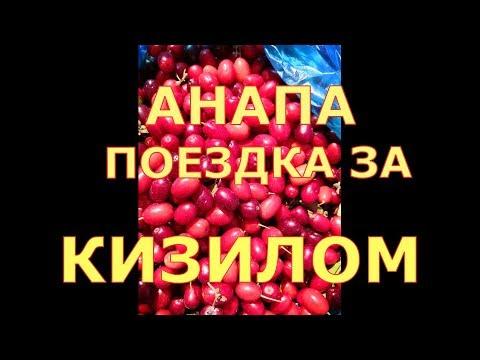#Анапа,лес,поездка за кизилом. (в ст. Гостагаевской )