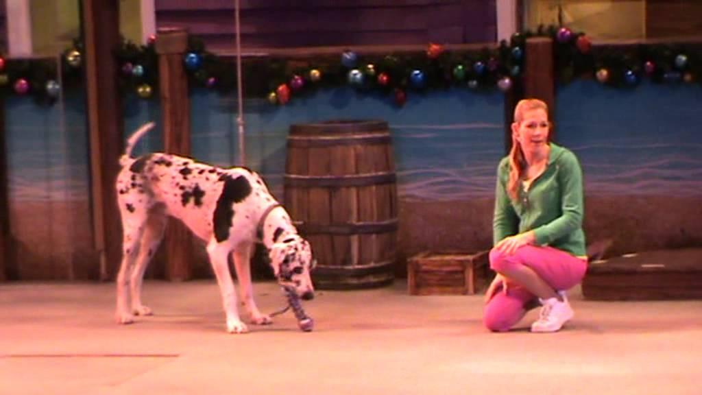 Orlando Dog Shows In December
