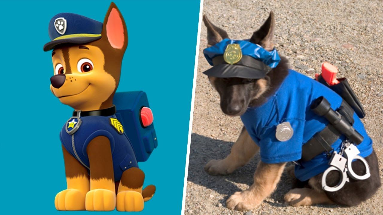 What Dogs Are Paw Patrol In Real Life