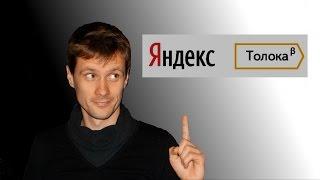 Яндекс Толока - как и сколько можно заработать