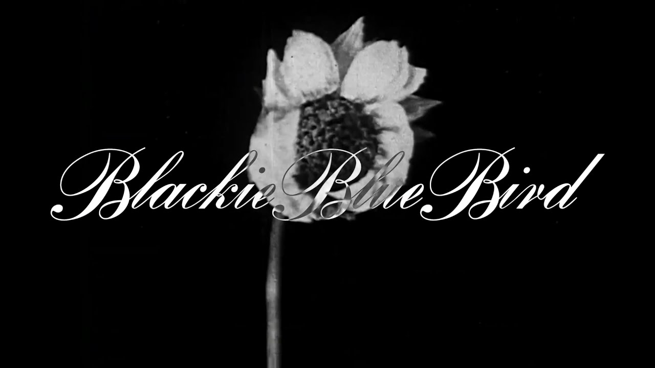"Music of the Day: BlackieBlueBird ""Goodbye in July"""